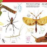 بخوان بدان بچسبان (پیشرفته) حشرات و پروانه ها - انتشارات پیام بهاران