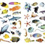 بخوان بدان بچسبان (پیشرفته) جانوران دریا - انتشارات پیام بهاران