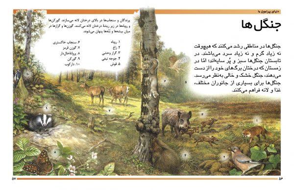 دایرةالمعارف مقدماتی دنیای شما کودکان (دنیای پیرامون ما) - انتشارات پیام بهاران