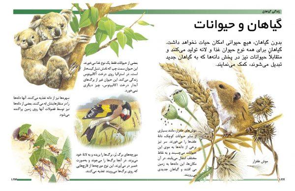 دایرةالمعارف مقدماتی دنیای شما کودکان (زندگی گیاهان) - انتشارات پیام بهاران