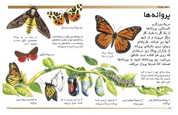 دایرةالمعارف مقدماتی دنیای شما کودکان (دنیای حیوانات) - انتشارات پیام بهاران