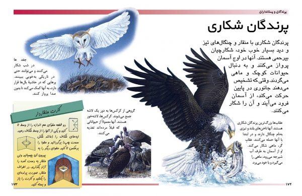 دایرةالمعارف مقدماتی دنیای شما کودکان (پرندگان و پستانداران) - انتشارات پیام بهاران