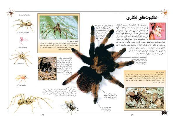 دانشنامه بزرگ کودک و نوجوان (حشرات و عنکبوت ها) - انتشارات پیام بهاران