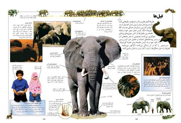 دانشنامه بزرگ کودک و نوجوان (پرندگان و پستانداران) - انتشارات پیام بهاران