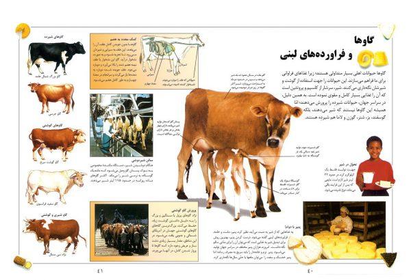 دانشنامه بزرگ کودک و نوجوان (بدن انسان و غذا) - انتشارات پیام بهاران