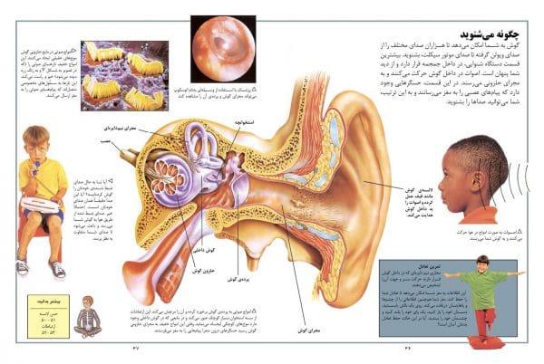 دانشنامه کوچک بدن انسان - انتشارات پیام بهاران