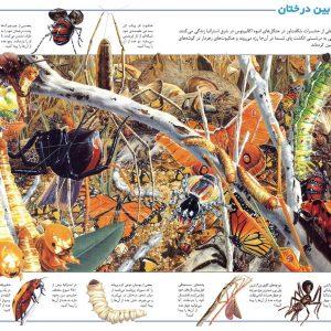 در جستجوی شگفتی های جهان حشرات - انتشارات پیام بهاران