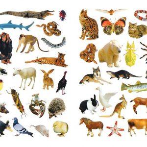 بخوان بدان بچسبان (مقدماتی) حیوانات - انتشارات پیام بهاران