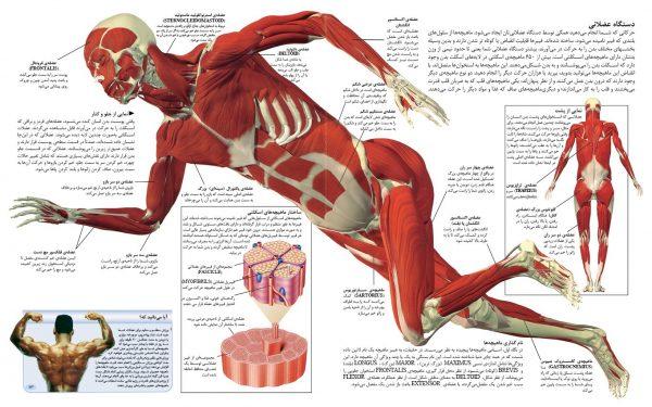 شگفتی های بدن +DVD مستند - انتشارات پیام بهاران